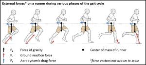 Gait cycle free body diagram